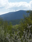 Tavaszi képek