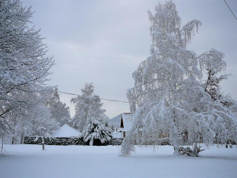 Téli fák 1