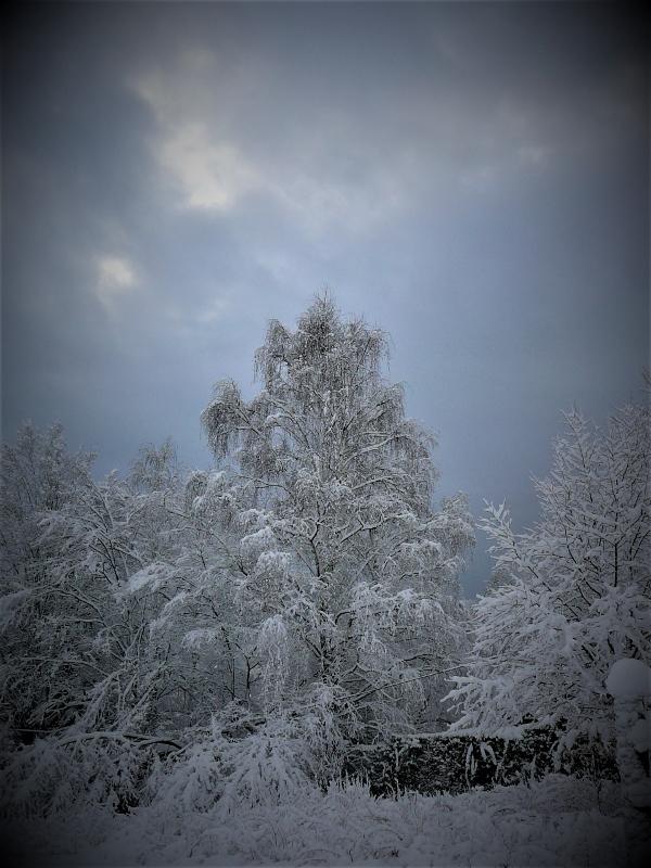 Téli fák 2